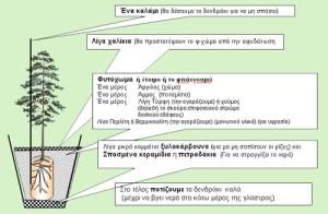 Πως φυτεύουμε ένα δέντρο